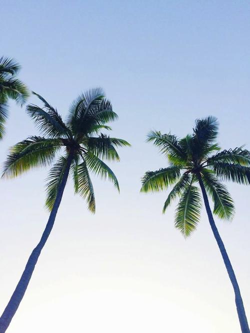 bahamas palm trees lyford cay