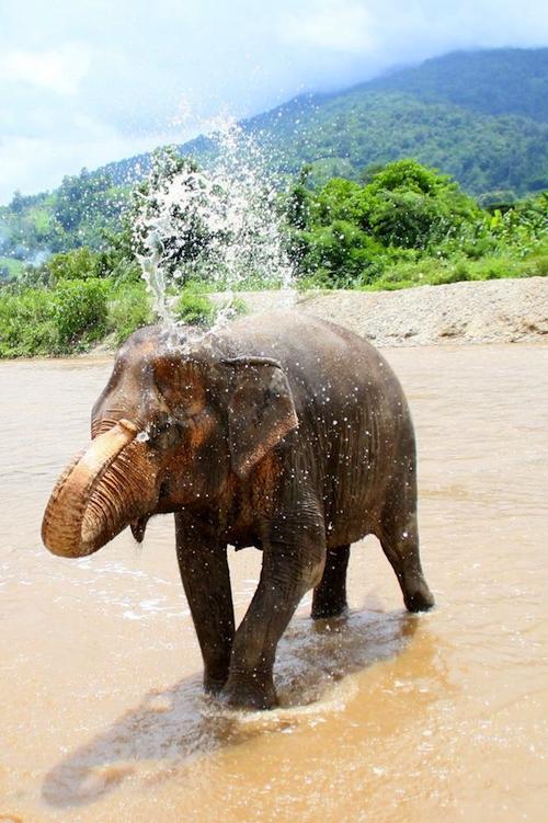 chiang mai elephant nature park thailand