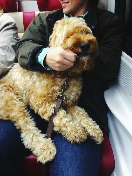 dogs on metro north