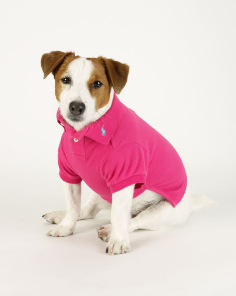 ralph lauren dog polo shirt