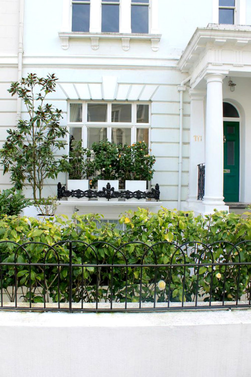 notting hill london landscaping