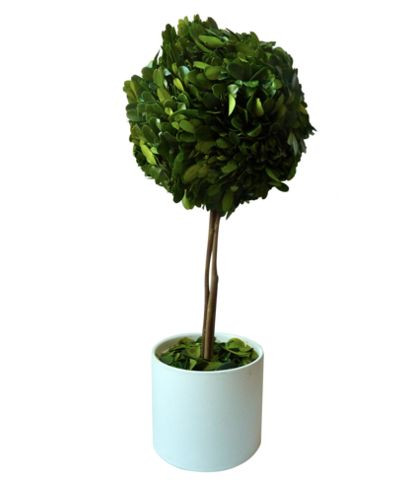 design darling tall boxwood topiary