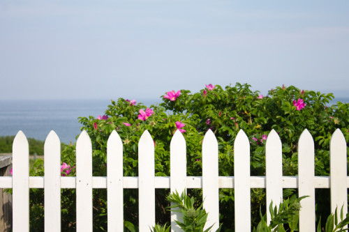 White picket fence and flowers overlooking the Atlantic Ocean in 'Sconset on Nantucket