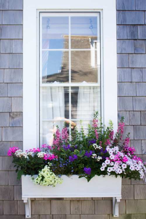 nantucket window boxes