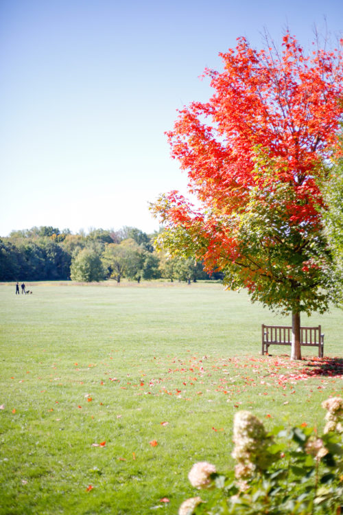 new-canaan-waveny-park-on-design-darling