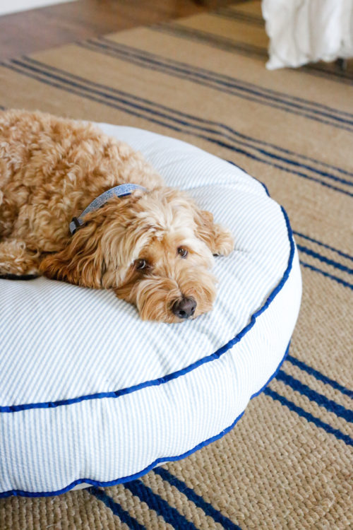 amy berry dog bed on design darling