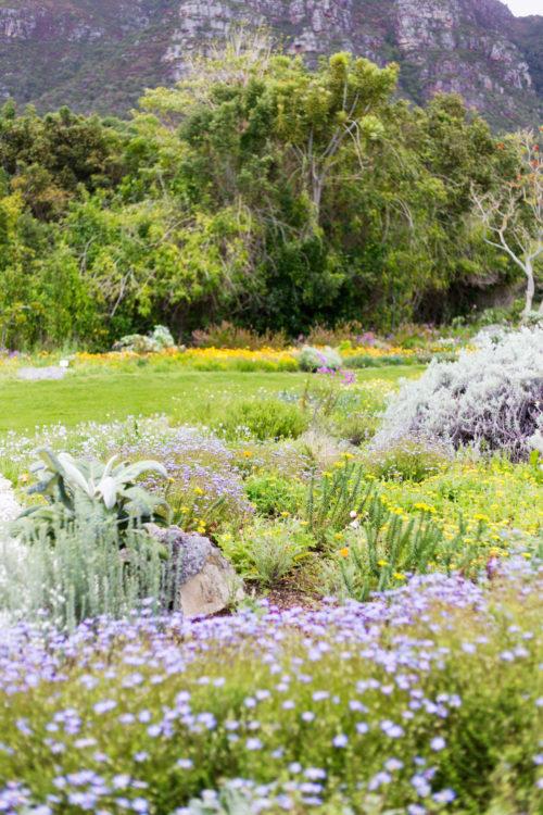 kirstenbosch gardens in cape town