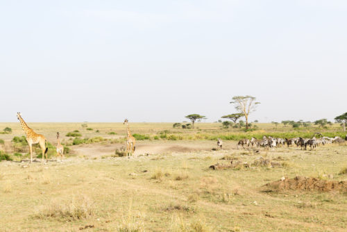 kruger national park vs serengeti comparison
