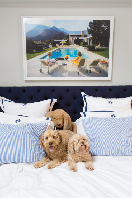 design darling cockapoo rory slim aarons print matouk bedding copy