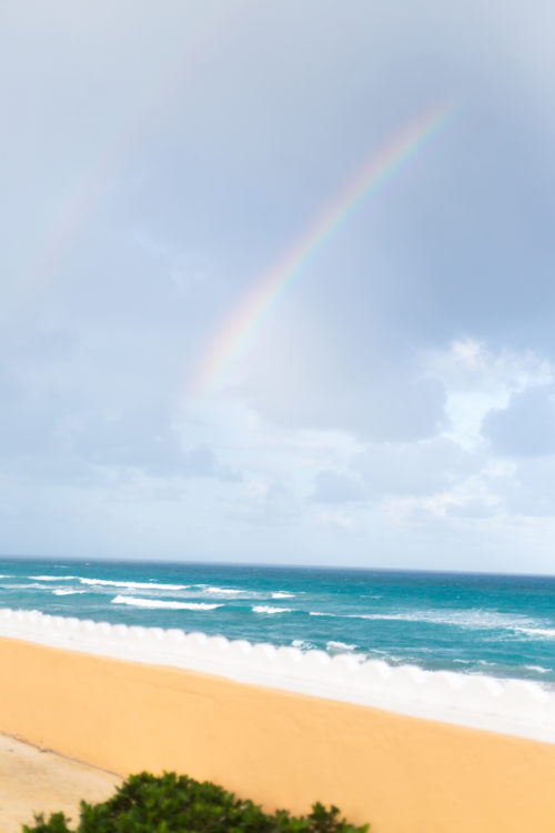palm beach rainbow