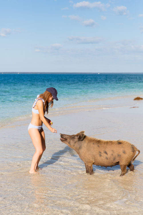 vineyard vines seersucker ruffle bikini with swimming pigs of abaco