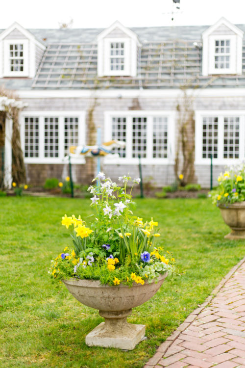 nantucket daffodil festival design darling