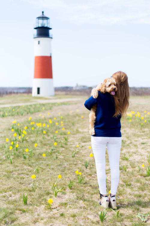 design darling rory at sankaty lighthouse nantucket
