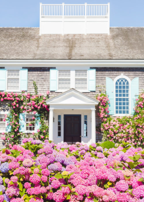 climbing roses and pink hydrangeas nantucket