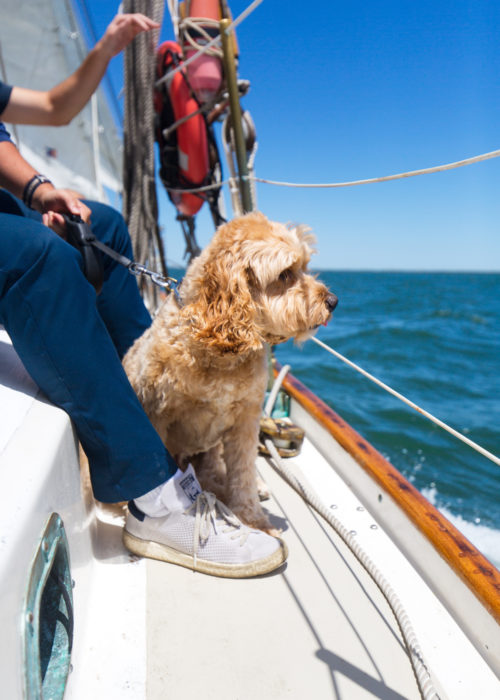 dog friendly sailboat charter nantucket