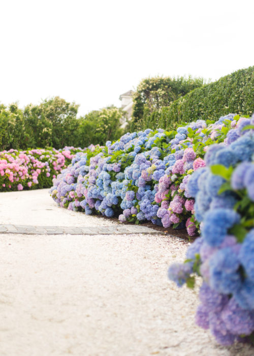 hydrangea driveway nantucket on design darling