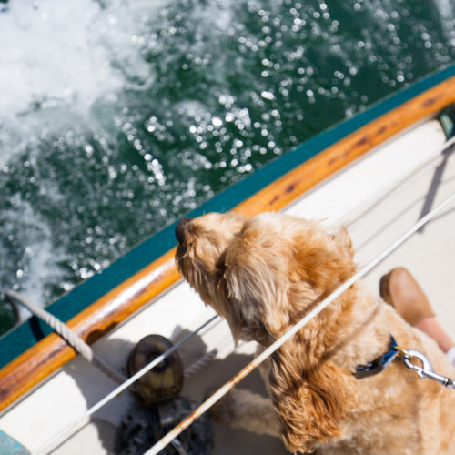 nantucket sailboat charter dog friendly
