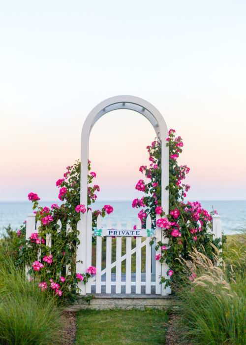 pink rose arbor in 'sconset nantucket