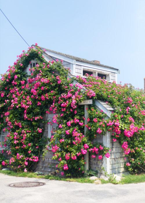 rose covered cottage sconset nantucket